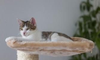 Zakaj vsak maček potrebuje mačje drevo